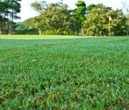 Le champ vert avec la rosée photo libre de droits