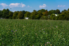 Le champ vert fleurit dehors le paysage d'étendue de parc image libre de droits