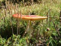 Le champignon Photographie stock libre de droits