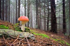 Le champignon de couche rouge Photo libre de droits