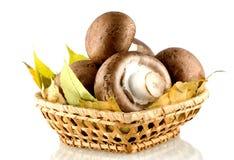 le champignon de paris répand dans un panier, sur le fond blanc Images stock