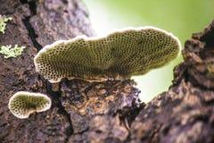 Le champignon et ce de parenthèse est des pores Photographie stock libre de droits