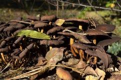 Le champignon et sèchent des feuilles Photo stock
