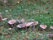 Le champignon ferest de chute photo libre de droits