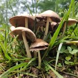 Le champignon répand de petites maisons Alice de la nature samsungs8 indépendante au pays des merveilles photo stock