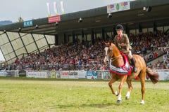 Le champion suprême de cheval au Salon Agricole Royal du Pays de Galles images libres de droits