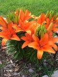 Le chapeau de fleurs se développent bien dans Ontario Photo libre de droits