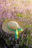 Le chapeau de la femme dans le domaine de lavande dans le coucher du soleil image stock