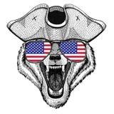 Le chapeau de port animal de pirate de Wolf Dog Wild a entassé le chapeau, le marin à trois cornes, le marin, le marin, ou le mar Photos libres de droits
