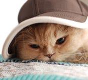 le chapeau proche de chat s'use vers le haut Images stock