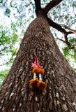 Le chapelet sur les personnes thaïlandaises d'arbres croient à la forêt Image libre de droits