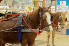 Le chariot de cheval avec des personnes dans Lampang chez Wat Phra That Lampa Image stock