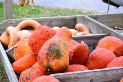 Le chariot en bois du ` s d'agriculteur a rempli de potirons et de courges oranges Photos stock