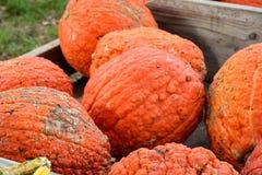 Le chariot en bois du ` s d'agriculteur a rempli de potirons et de courges oranges Images stock
