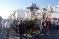 Le chariot a tiré par les taureaux 07 Image libre de droits