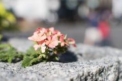 Le charme des fleurs, la beauté Image stock
