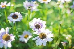 Le charme des fleurs, la beauté Photo stock