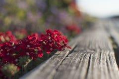 Le charme des fleurs, la beauté Images libres de droits