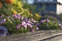 Le charme des fleurs, la beauté Photo libre de droits