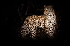 Le chasseur dans l'obscurité Image libre de droits