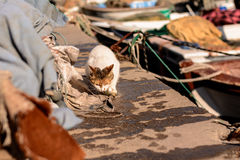 Le chat égaré affamé mange le poisson de mer pêché Photographie stock