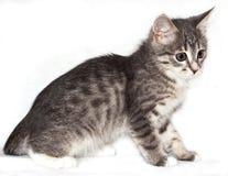 Le chat étonné Photos libres de droits