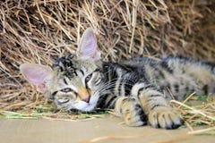 Le chat Photos libres de droits