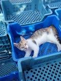 Le chat Photographie stock libre de droits