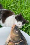 Le chat aime manger des poissons. photo stock