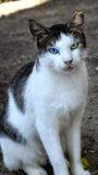 Le chat animal d'animal familier Photo stock