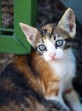 Le chat animal d'animal familier Photographie stock libre de droits