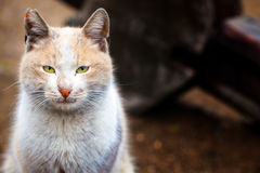 Le chat animal d'animal familier Photos libres de droits