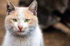 Le chat animal d'animal familier Images libres de droits