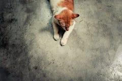 Le chat attend son dîner images stock