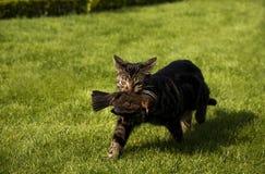 Le chat attrape un oiseau Photos stock
