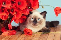 Le chat avec des pavots fleurit le mensonge sur la table en bois image libre de droits
