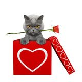 Le chat avec s'est levé se reposant dans la boîte de valentines D'isolement sur le blanc Image stock