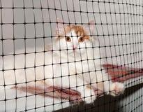 Le chat blanc avec les taches rouges se repose dans la cage Image libre de droits
