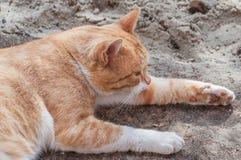 Le chat blanc-rouge regarde avec précaution de gauche à droite Photos libres de droits