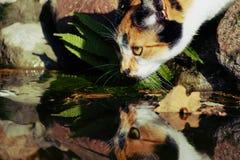 Le chat boit l'eau Images libres de droits