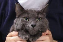 Le chat britannique de shorthair parle en faveur Photos stock