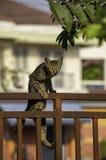 Le chat brun monte la rouille de fer de barrière image libre de droits