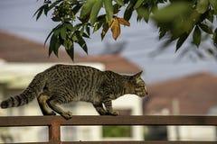 Le chat brun monte la rouille de fer de barrière photo stock