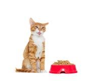 Le chat a collé sa langue photo stock