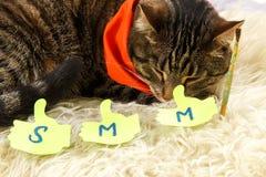 Le chat créatif dort avec des labels de SMM Images stock