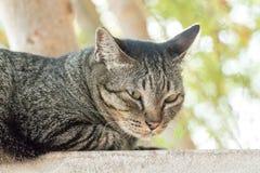 Le chat détendent Images libres de droits