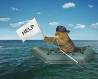 Le chat dans le bateau gonflable a besoin de l'aide image libre de droits