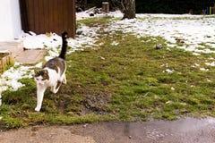 Le chat dans le jardin fonctionne de la neige images stock