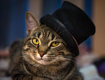 Le chat dans le chapeau Photo stock