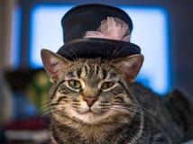 Le chat dans le chapeau Photographie stock